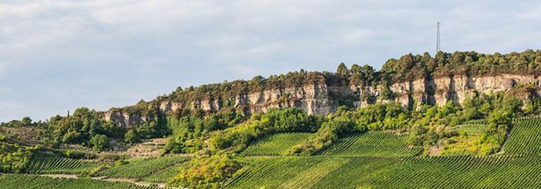 Aussicht über Weinberge des Weingut Frieden